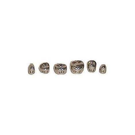 Adult 1st Permanent Upper Bicuspid Stainless Steel Crowns (DSC)